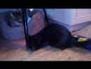 Котёнок с Худайбердина,56А