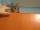 Наша кошка Муся
