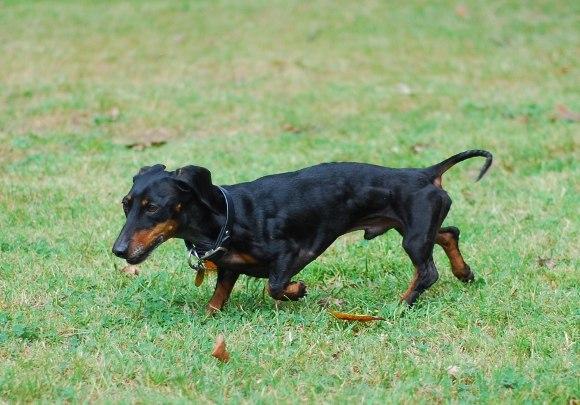 Фото собак в спортивной кондиции - Страница 5 1QbEUnCvrg4