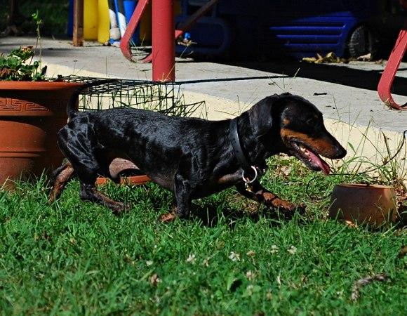 Фото собак в спортивной кондиции - Страница 5 KdR5gVrT7oU