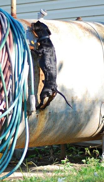 Фото собак в спортивной кондиции - Страница 5 3RLqCT5NkX0
