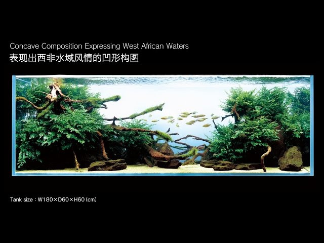 [ADAview] 180cm Aquarium Layout Concave Composition Expressing West African Waters(ENCN Subs)