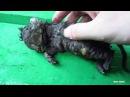 Котенок найденный после ливня Чудесная история исцеления малютки