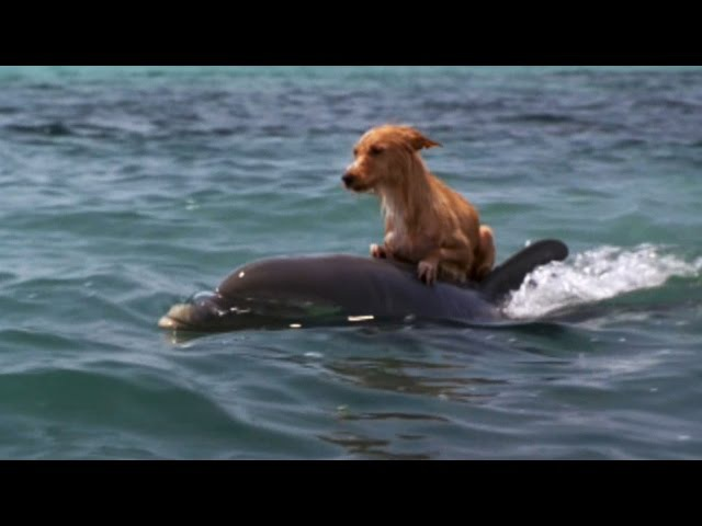 DOLPHIN DOG SPECIAL FRIENDSHIP - Vangelis: Song Of The Seas