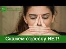 Скажем стрессу НЕТ! Лекция доктора Н.Г. Байкуловой