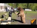 Схватка медведя с человеком, или как в абхазском селе поселился Балу