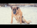 ПОПРОБУЙ НЕ ЗАПЛАКАТЬ Самая грустная песня про собак До слёз Песня которая трогает душу!