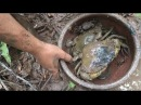 Primitive Technology with Survival Skills looking for food Crab Shrimp