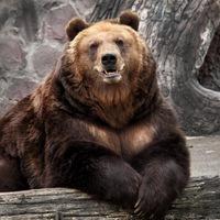 Анкета Иван Медведь