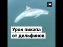 Дельфины-пикаперы
