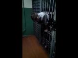Пацан застрял в клетке