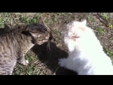 Это разборка кошачья