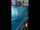 Дельфинарий Набережные Челны.Макар покатался.
