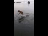 Когда, что-то неведомое, коснулось тебя под водой...)))