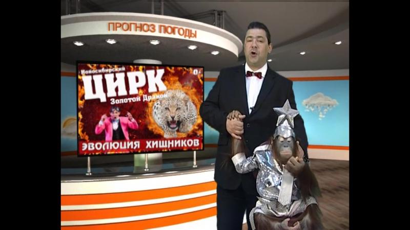 Прогноз погоды на 25 мая от орангутана Василисы и клоуна-акробата из цирка Золотой Дракон