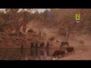 Viasat Nature: Животные, которые изменили историю - Еда (2015) HD 720
