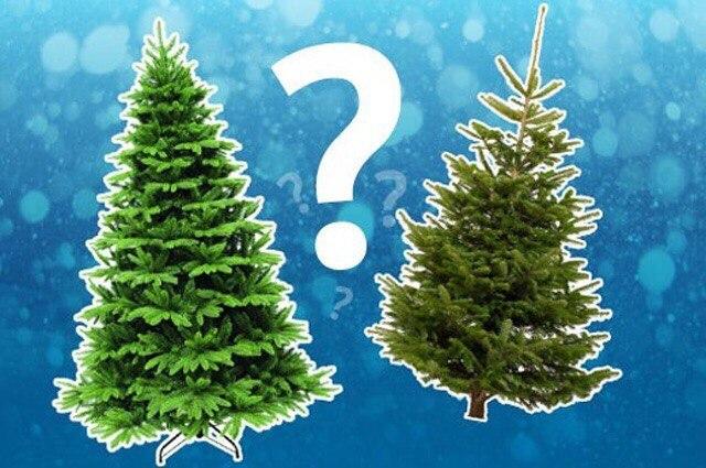 А какую елку будете ставить вы?