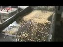 Walnut Chopping Machine|Nut Kernel Chopper Machine|Peanut Cutting Machines