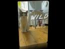 Дикие маленькие кошки / 2017 / Fulll HD