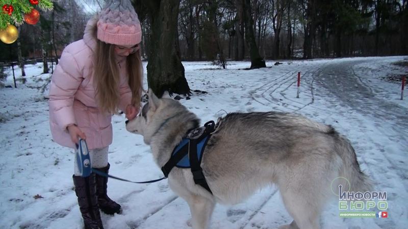 Зовсім скоро Winter Dog Fest 2018