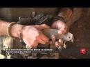 17 ЛИСТОПАДА 2017 р. На Східному фронті без змін: як живуть українські вій...