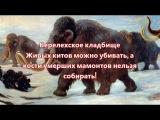 Берелехское кладбище киты и мамонты