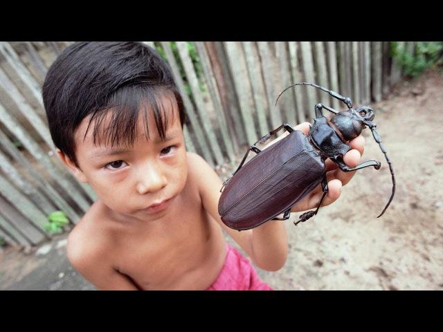 ЧТО БУДЕТ ЕСЛИ НАСЕКОМЫЕ ВДРУГ ИСЧЕЗНУТ Удивительные насекомые