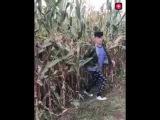 Best fun prank in field