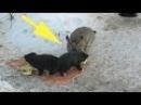 Одичавший кролик спас осиротевших щенков Эта история тронула всех