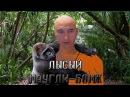 Лысый Маугли-Бомж - ЭПД 17 Видеочат 18