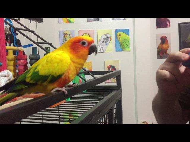 Mango enjoys the sounds of an ocarina
