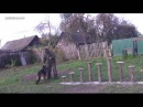 Обучение немецкой овчарки преодолевать полосу препятствий за одно занятие   Урок 14 - YouTube