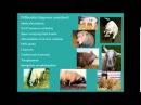 Диагностика неврологических расстройств у овец / Diagnosis of neurological disorders in sheep (бесплатная часть вебинара)