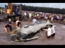 Русалки и всякие подводные монстры снятые на видео