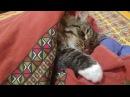 Смешной кот спит с мышей Funny cat with mouse