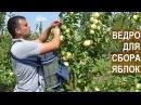 Супер-ведро для бережного сбора яблок. Яблоневый сад КФХ Берзой