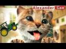 ПРИКЛЮЧЕНИЕ МАЛЕНЬКОГО КОТЕНКА 4 мультик смешное видео для детей про котиков му...