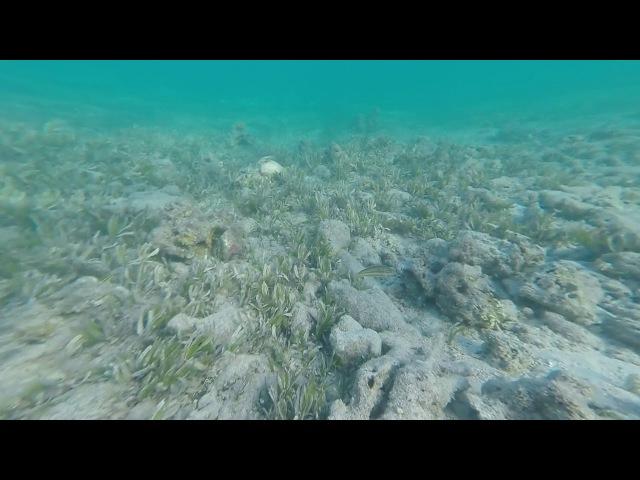 Красное море !! Египет Aurora Oriental Resort, на пляже отеля.