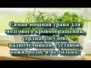 Самая мощная трава для мозгового кровообращения, сердца, сосудов, надпочечников, суставов, кожи, вол