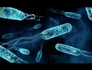 Лекция по микробиологии №4 Часть V