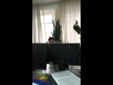 Игорь Косенко — Live