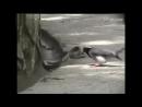 Месть птицы Птица убивает змею .