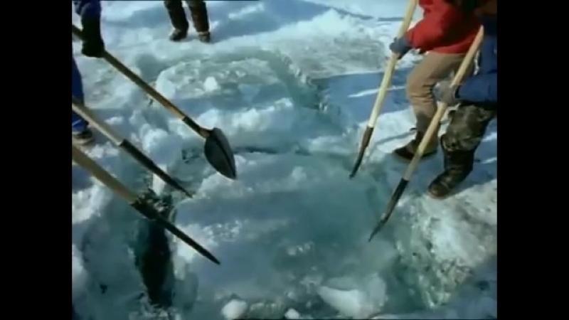 Одиссея Жака Кусто на Байкале - фильм про великий Байкал. Загадки и природа Байк