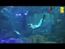 25-летняя студентка работает русалкой в парижском аквариуме