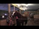 Правила чистки лошадок