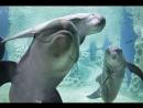 Люди и Дельфины ( часть - 2 ) ...