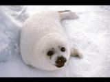 Посол США в России Джон Теффт: «Наука имеет первостепенное значение в освоении Арктики!»