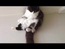 Смешные животные декабрь 2017 _ Funny Pet Videos