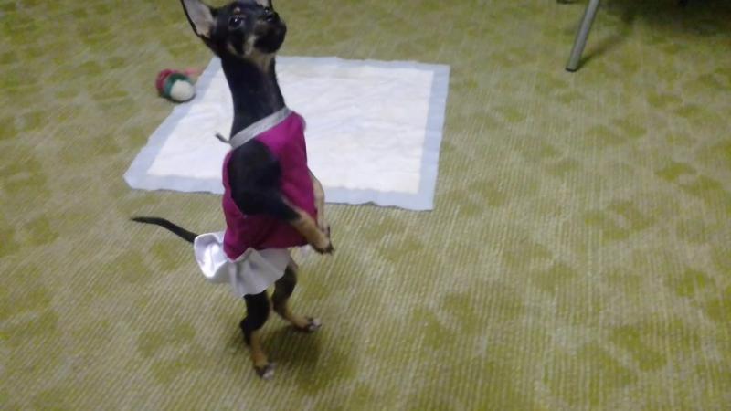 джуля танцует