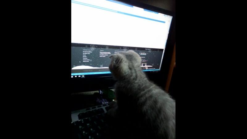 Кот компьютерщик